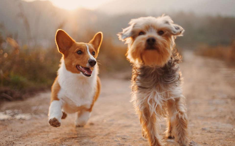seguro para mascotas portada